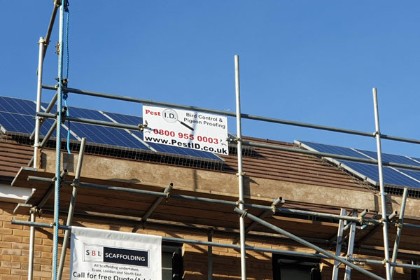 solar panels pigeon proofing by pest id in basildon essex