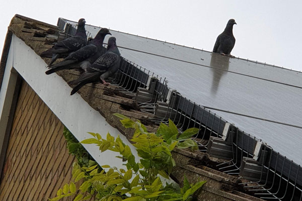 solar panels pigeon proofing by pest id in maldon essex