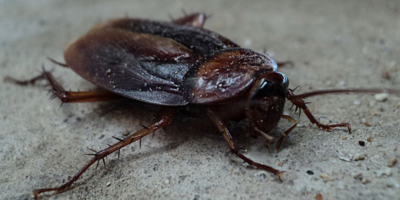 cockroach removal Essex