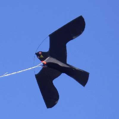 a black hawk kite