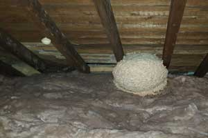 wasp nest in a loft