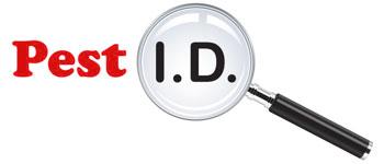 logo: pest id