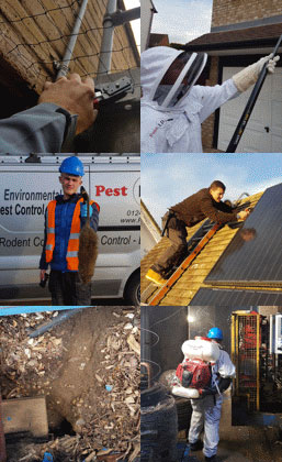montage of pest id workers getting rid of pests